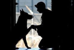 servicedog